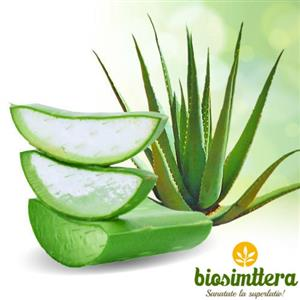 Beneficiile pe care le ofera Aloe Vera